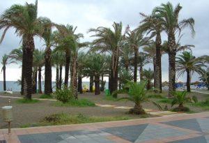 Palmeras en la playa de la Carihuela
